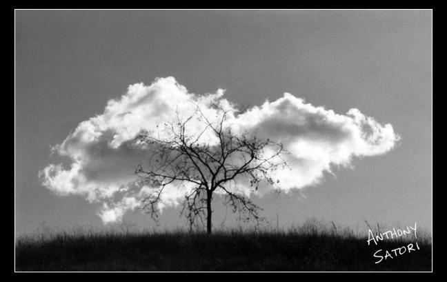 """Tree and Cloud"" | Anthony Satori"