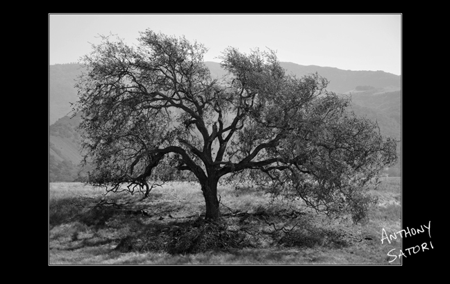 """Grand Oak Tree""  